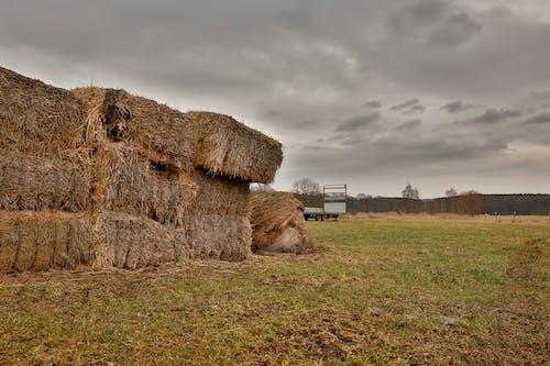 Fotos de stock gratuitas de agricultura, al aire libre, arboles