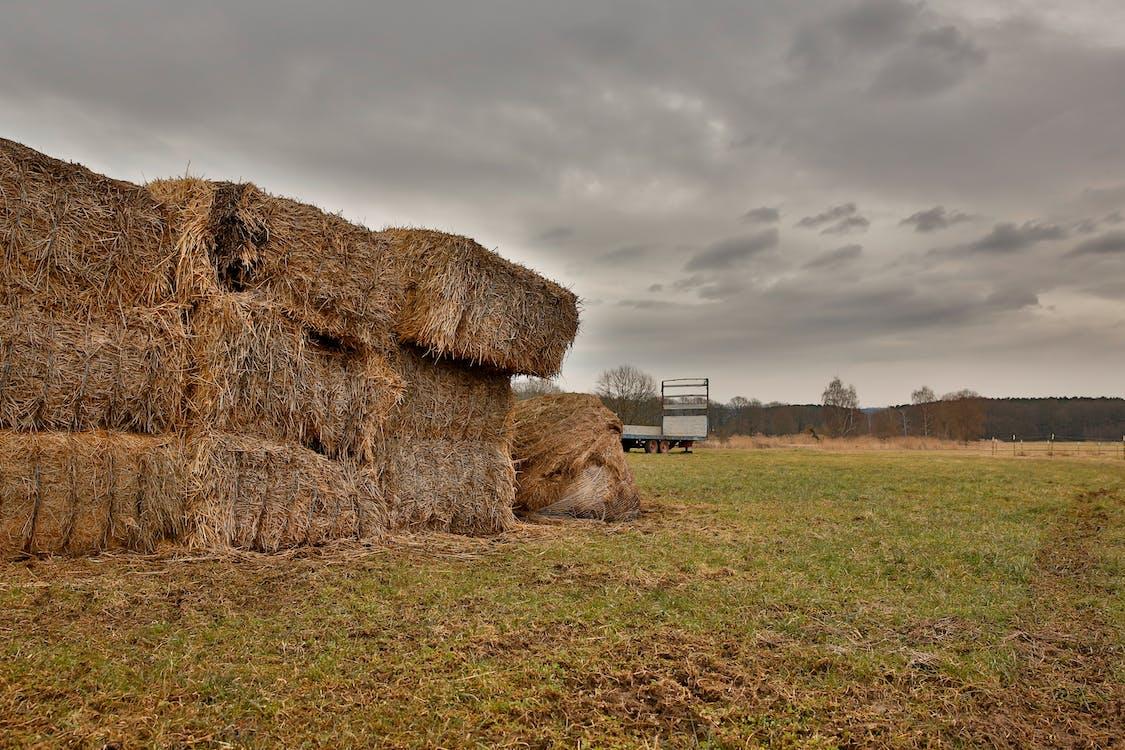 Brown Hays on Green Grass Field Under Gray Clouds