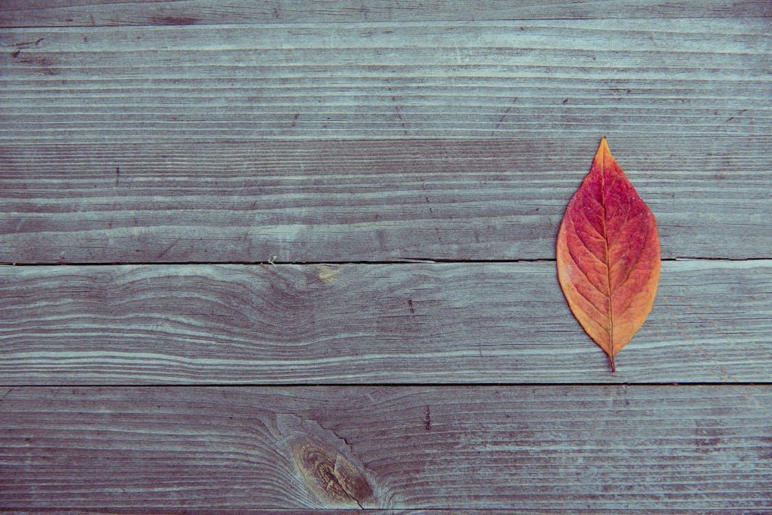 dry leaf, HD wallpaper, leaf