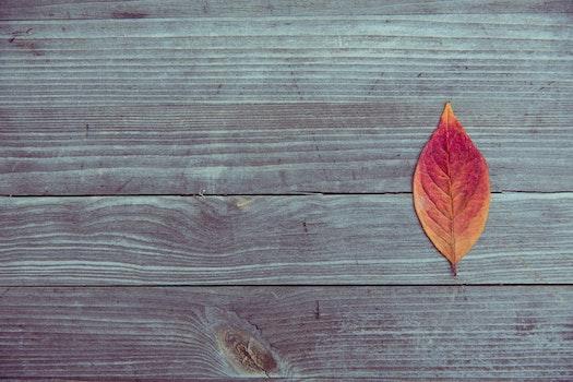 Orange and Red Leaf in Brown Wood Plank