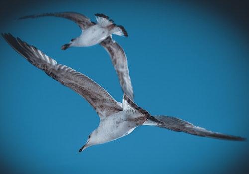Free stock photo of sky, bird, animal, freedom