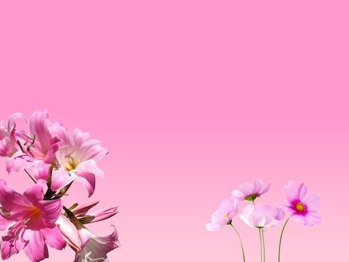 Ingyenes stockfotó finom, gyárak, növényvilág, rózsaszín virágok témában