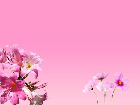 1000 interesting pink flowers photos pexels free stock photos photo of pink flowers mightylinksfo