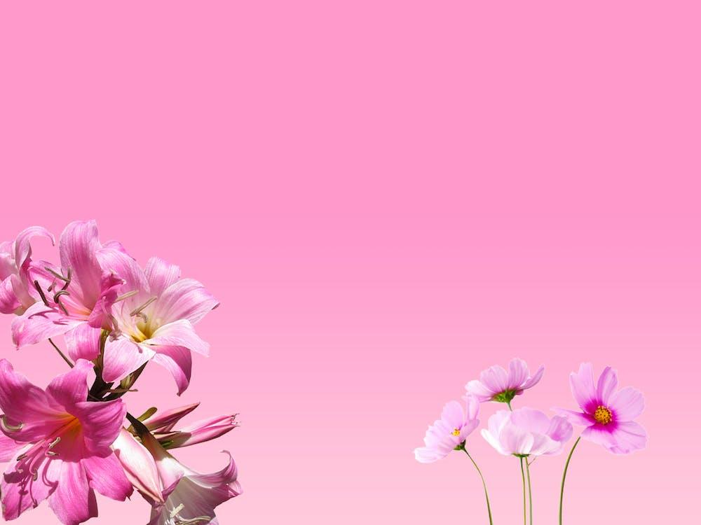 ピンクの花, フラワーズ, フローラ
