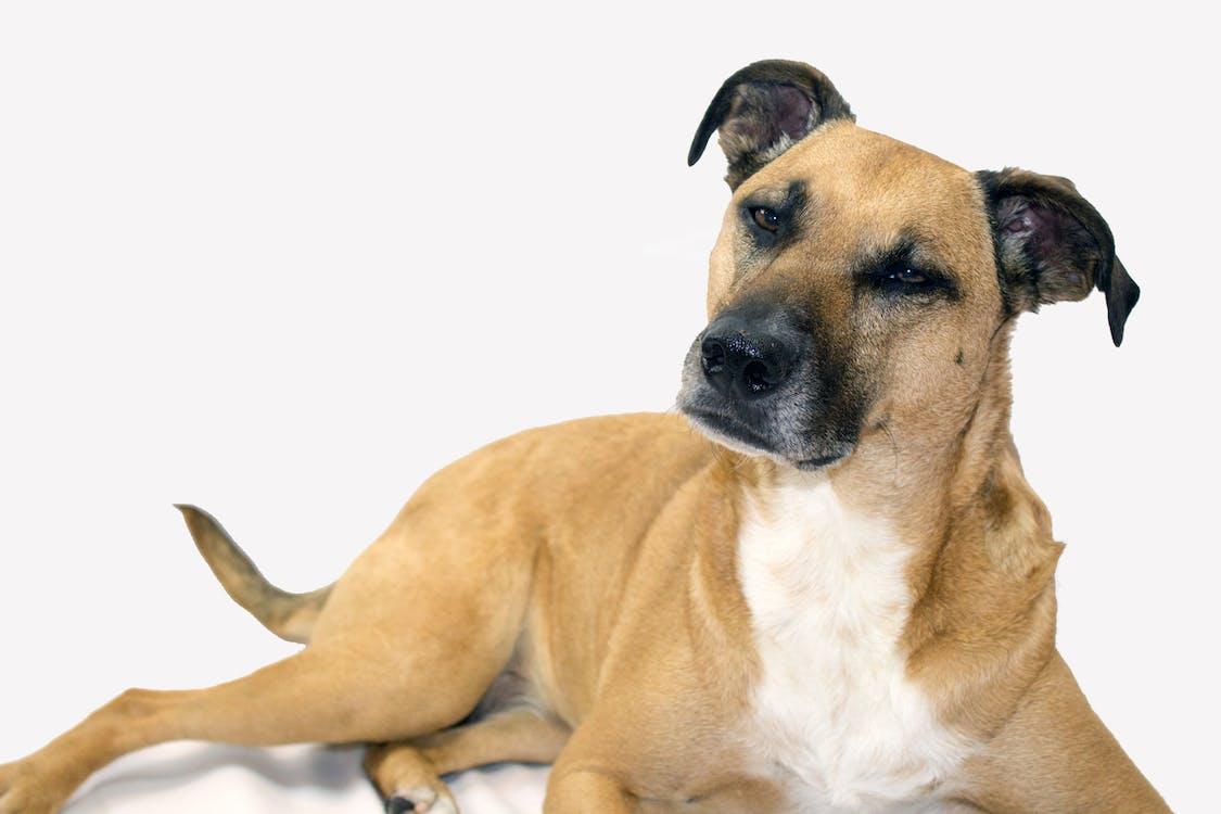 köpek, kurtarma köpeği, sevimli