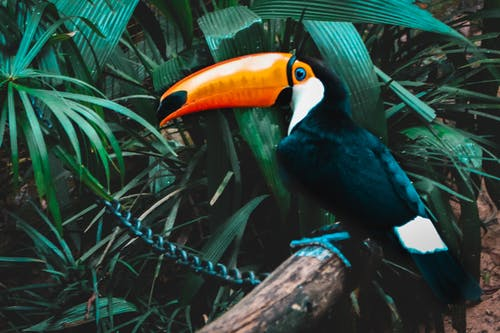 Fotos de stock gratuitas de animal, brasil, fauna, naturaleza
