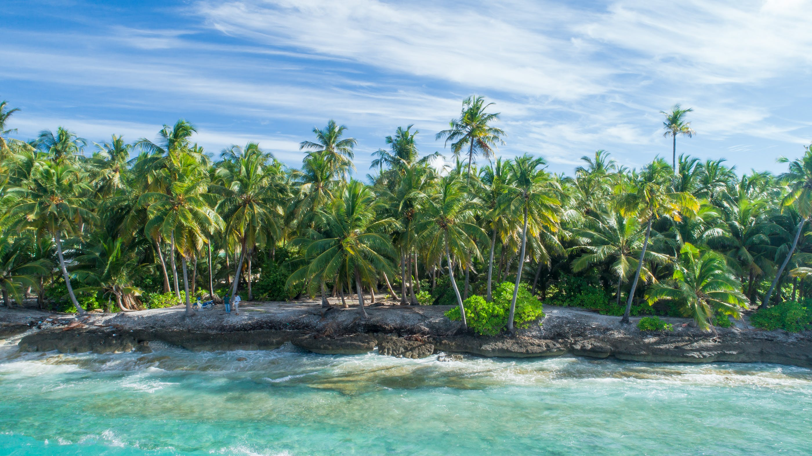 Coconut Forest Near Water
