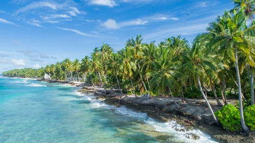 Green Palm Trees on Beach Side