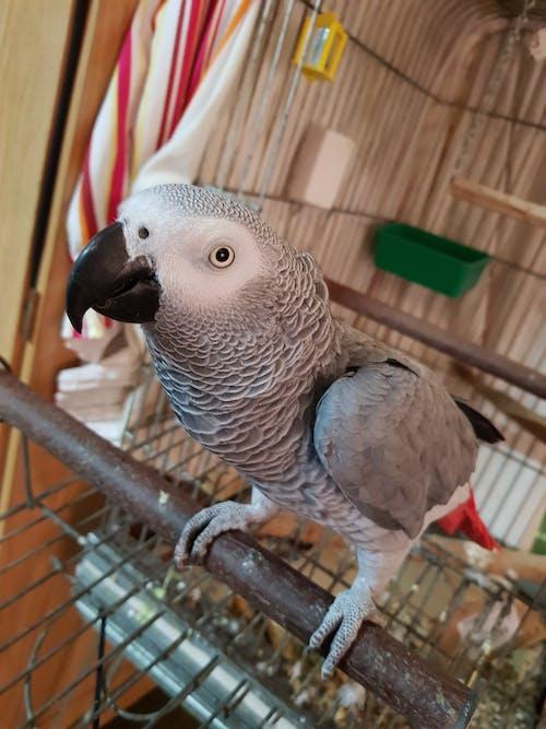 Darmowe zdjęcie z galerii z #birds