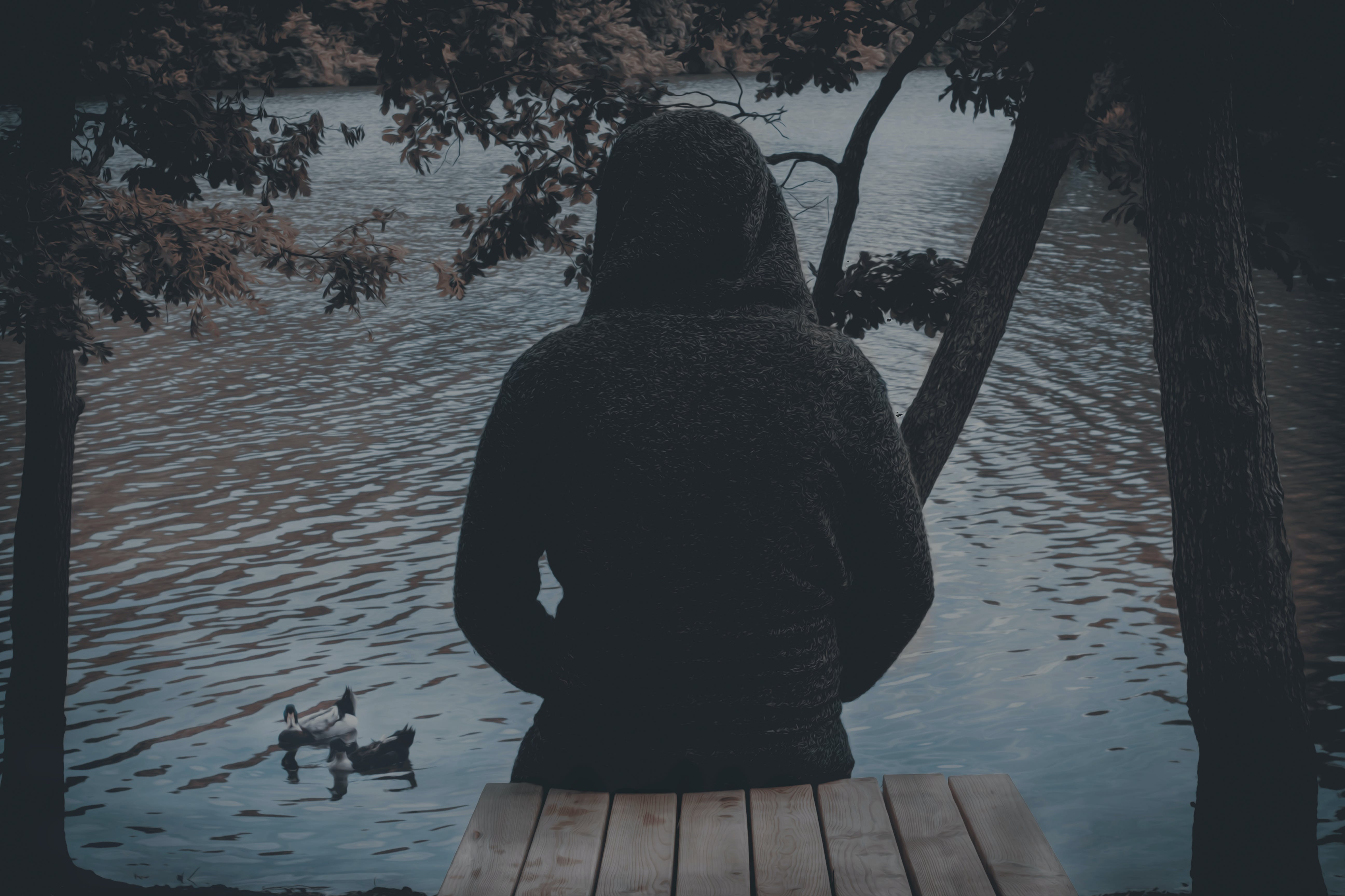 Free stock photo of back, duck, lake, trees