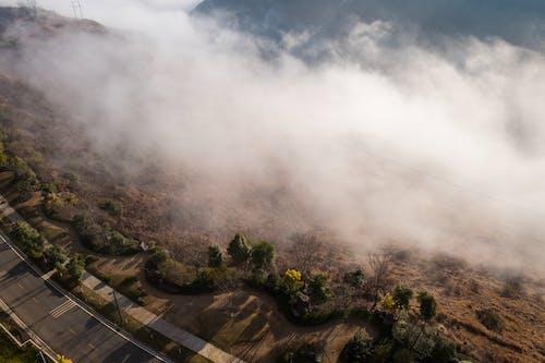 Darmowe zdjęcie z galerii z droga, drzewa, góra, jasny