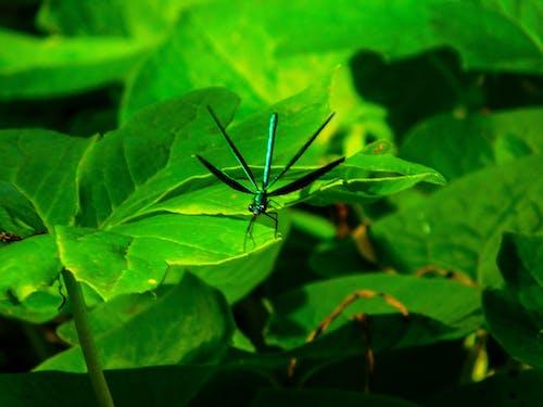 Gratis stockfoto met groen, insect, libel, natuur