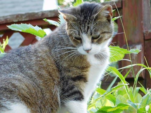 Gratis stockfoto met huisdier, kat, katje, natuur