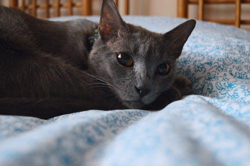 Photos gratuites de chat, dormir, tête de chat