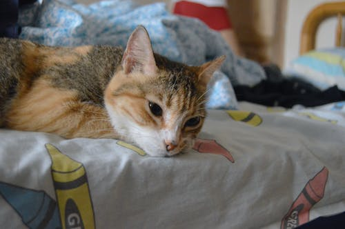 Photos gratuites de chat, dormir, lit de chat