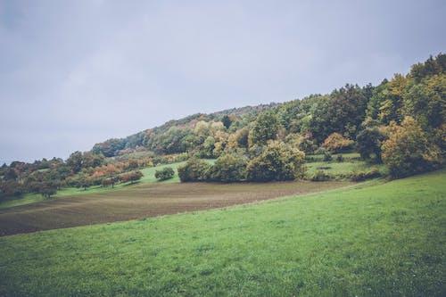 Photos gratuites de arbres, champ, ciel, clairière
