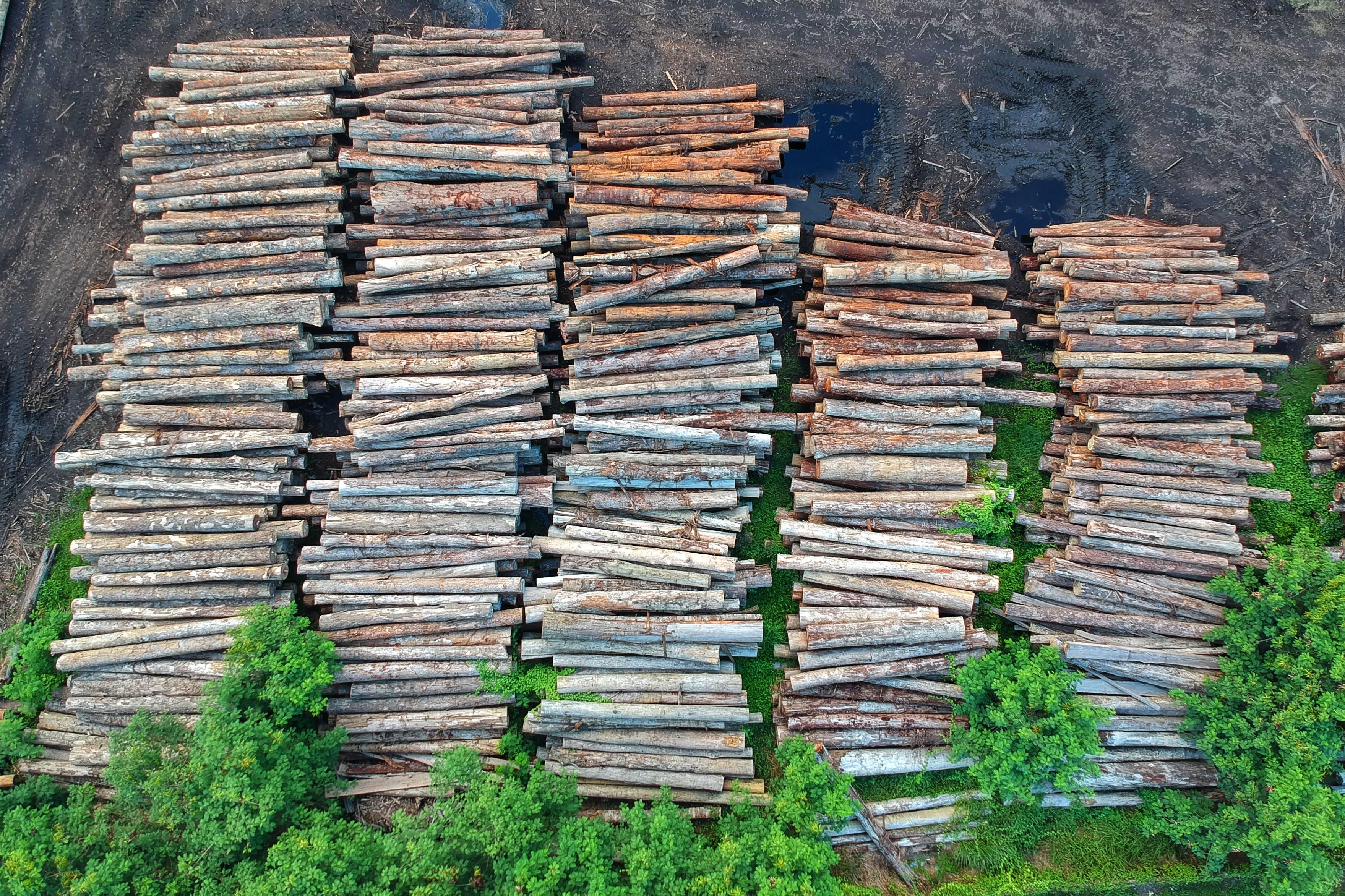 ağaç gövdeleri, ağaçlar, istif, kereste içeren Ücretsiz stok fotoğraf