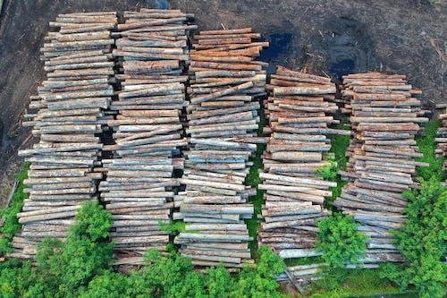 Foto d'estoc gratuïta de alt, arbres, boscos, de fusta