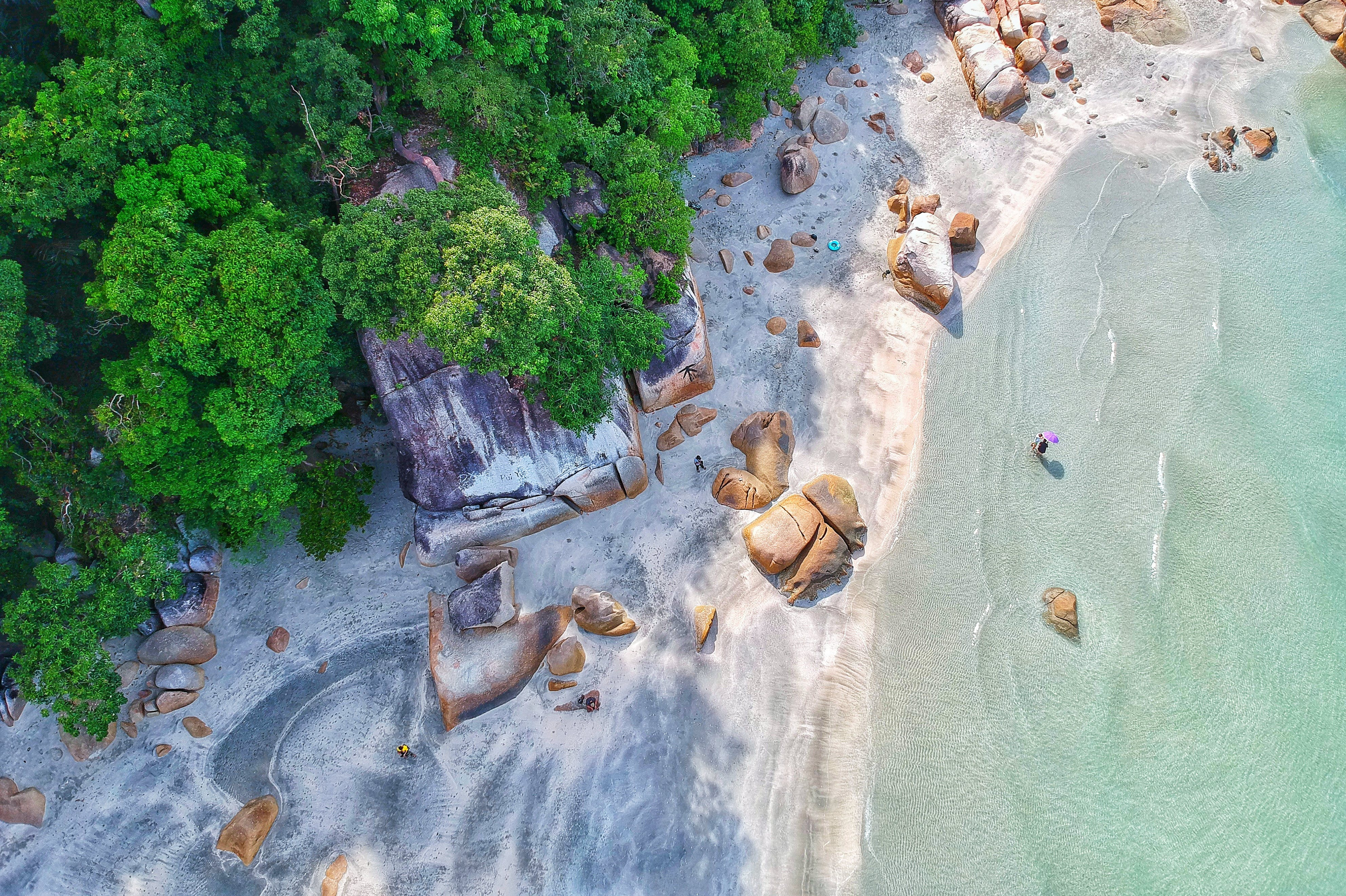 Aerial Photography of Beach Shore Near on Forest
