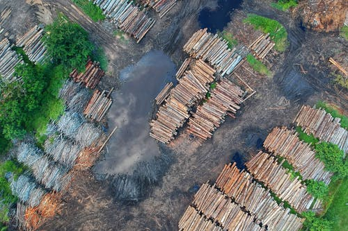 Bird's Eye View of Woodpile