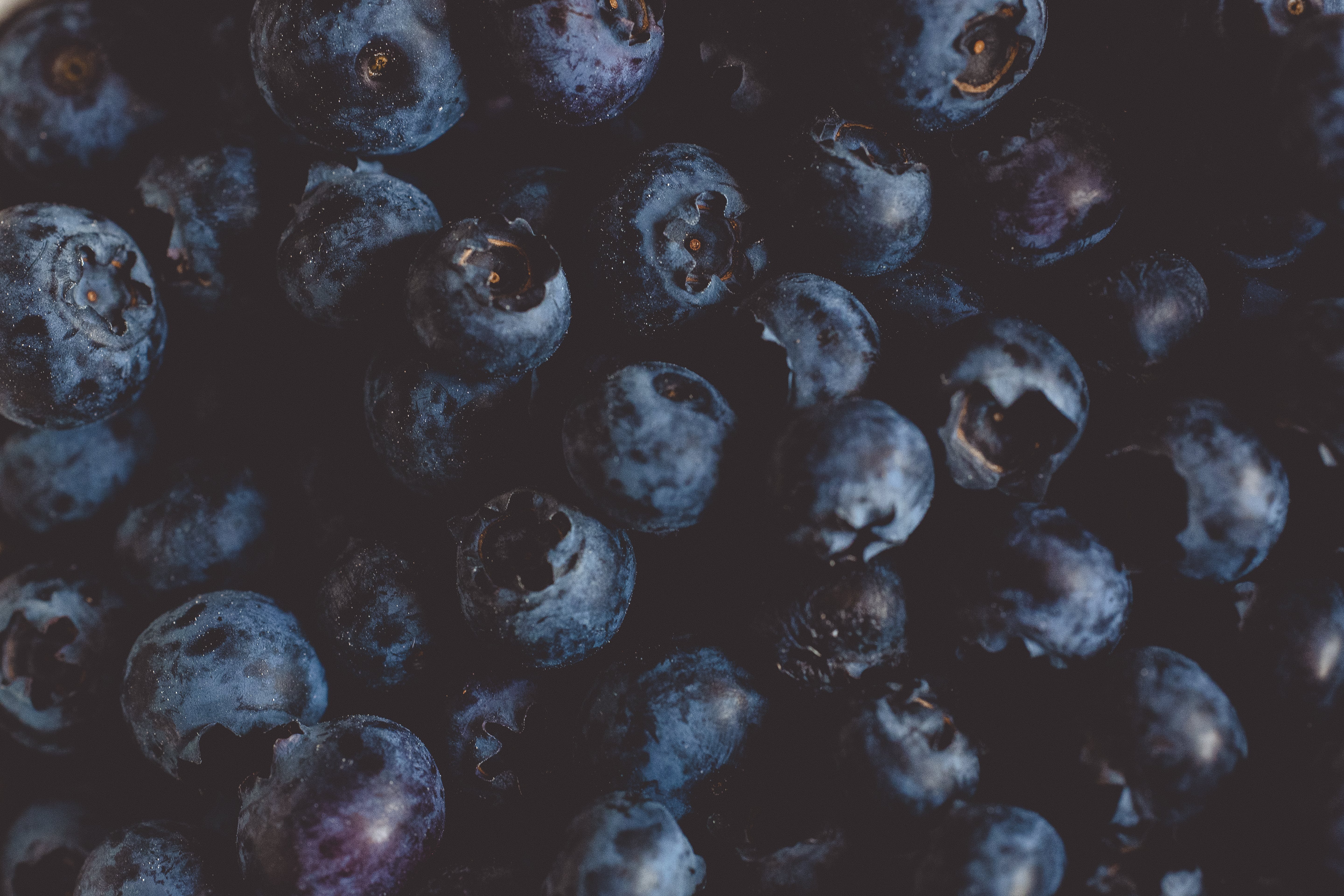 Blueberry Fruits Photography