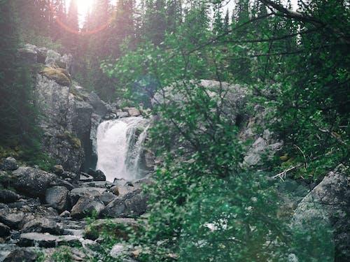 Fotobanka sbezplatnými fotkami na tému jã¤mtland, krajina, lens flare, les