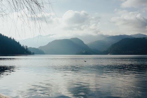 Ilmainen kuvapankkikuva tunnisteilla bled, elämää luonnossa, järvi veri, järvinäkymä
