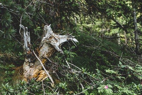 ağaç, bitkiler, doğa, güzel içeren Ücretsiz stok fotoğraf