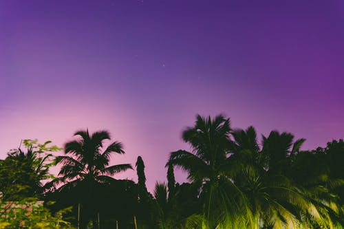 Ilmainen kuvapankkikuva tunnisteilla auringonlasku, kookospalmu, kookospalmut, luonto