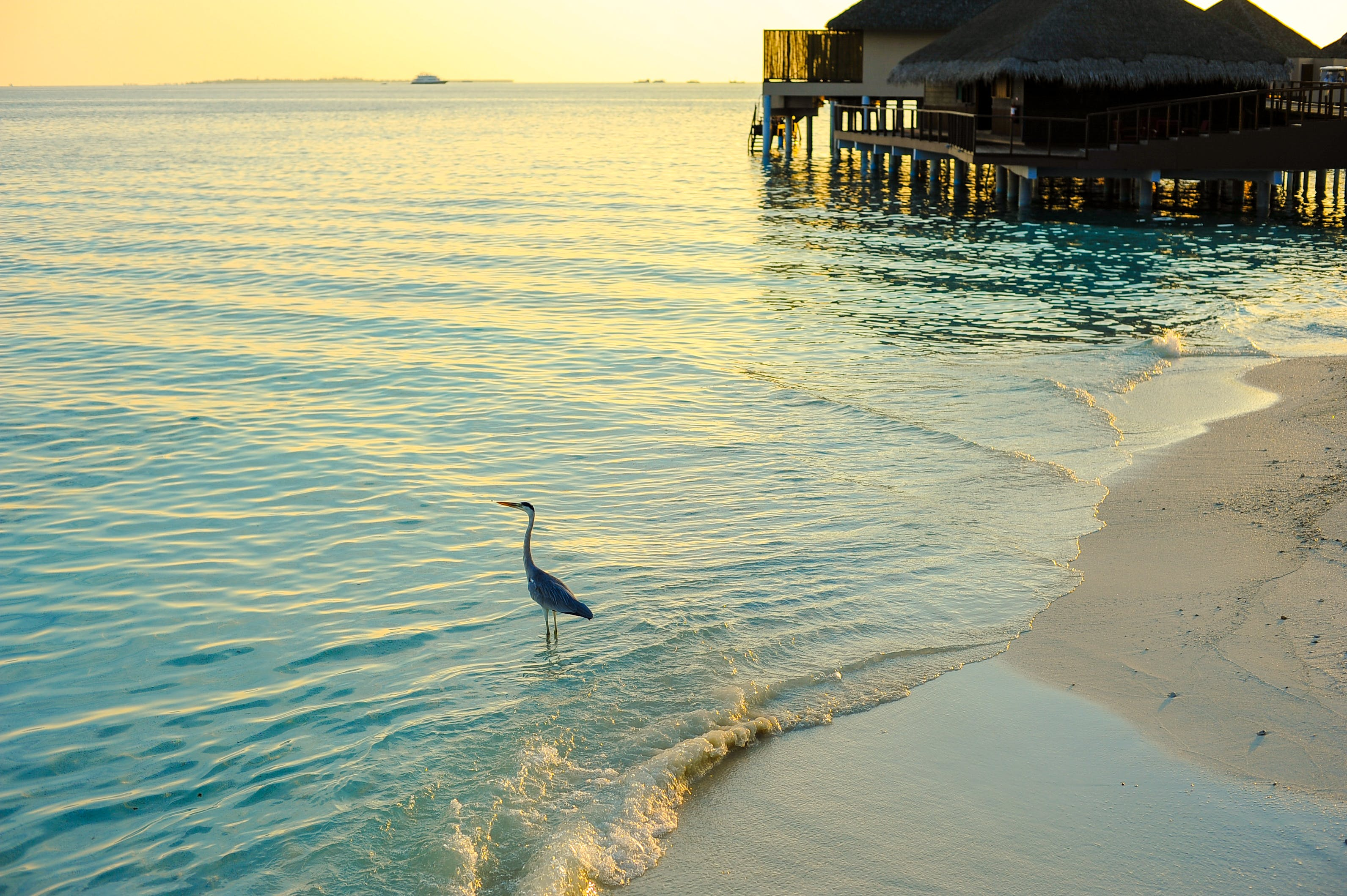 Gray Heron Standing on Large Clear Body of Water