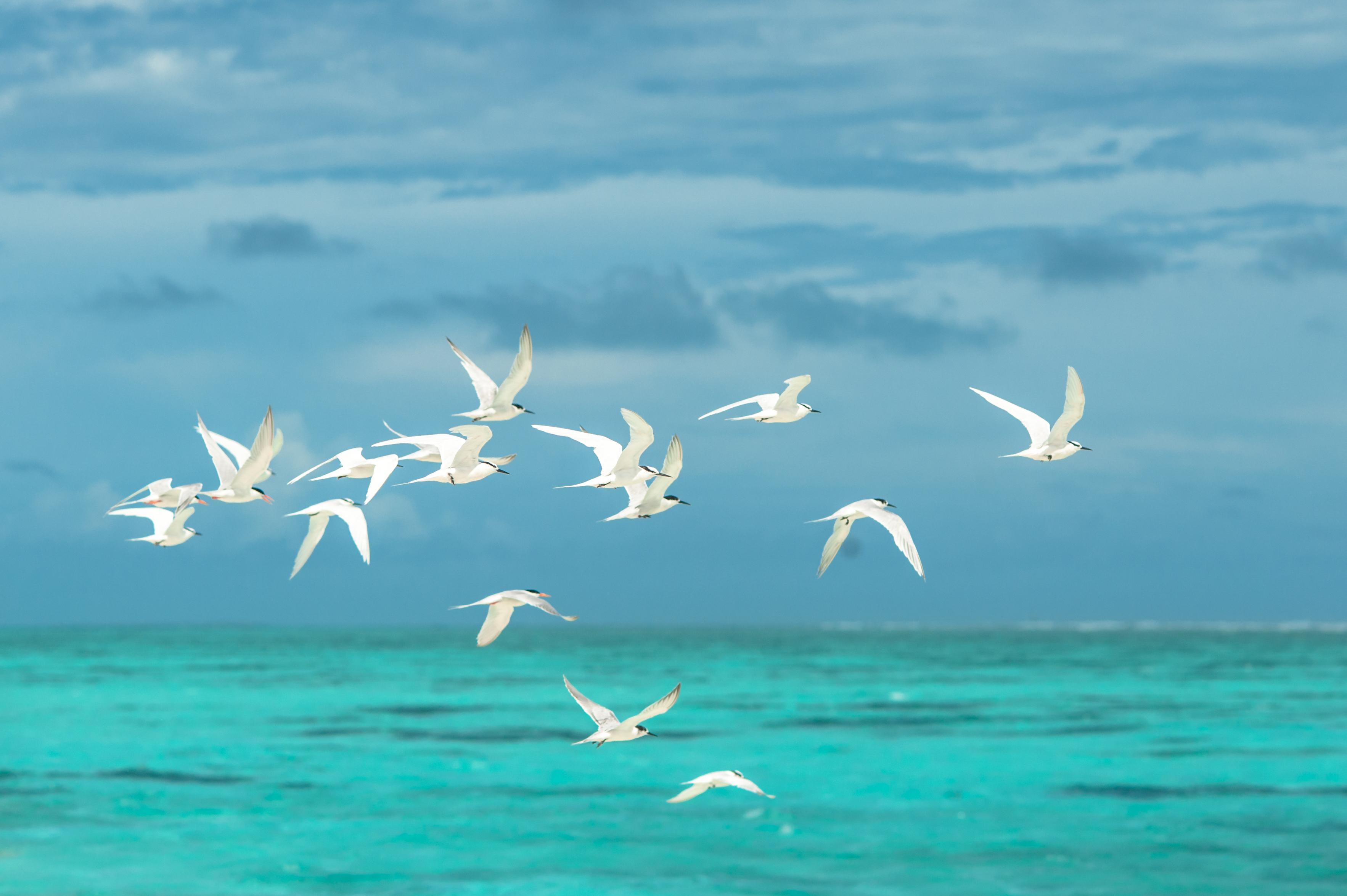 DIGITAL PICTURE//PHOTO//IMAGE//WALLPAPER//DESKTOP JPEG Birds