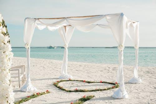 açık hava, biçim, Çiçekler, deniz içeren Ücretsiz stok fotoğraf
