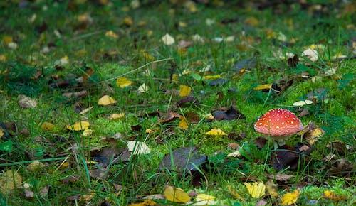 버섯의 무료 스톡 사진