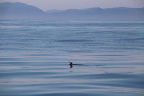Foto stok gratis air, air biru, air yang tenang, langit cerah