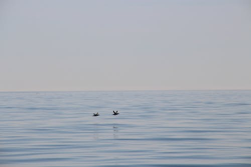 Foto stok gratis air, air biru, burung air, langit