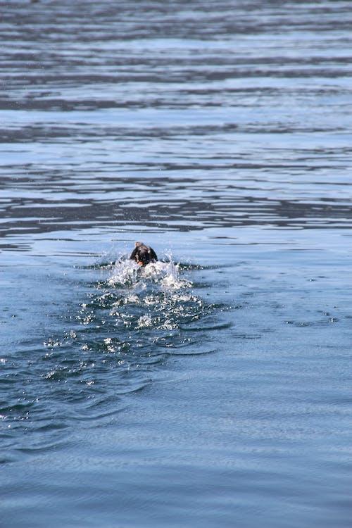 Foto stok gratis air, air biru, laut, lepas landas