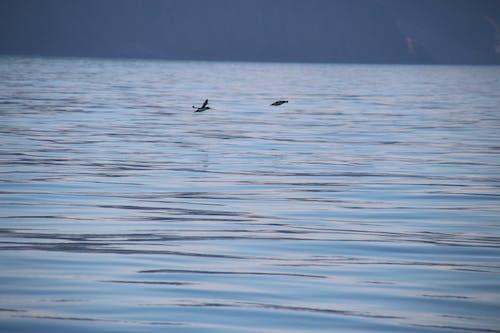 Foto stok gratis air, air biru, batu, burung air