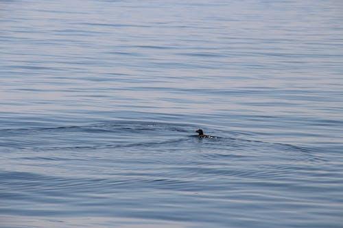Foto stok gratis air, air biru, air yang tenang, laut