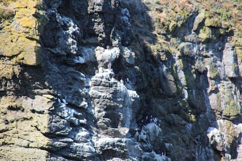Foto stok gratis Batuan berlumut, burung bersarang, koloni burung, putih