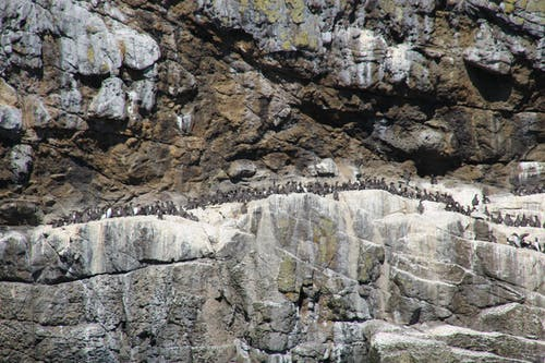 Free stock photo of bird colony, cliff face, nesting birds, rock face