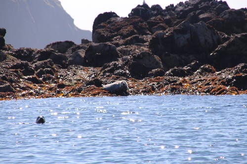 Free stock photo of blue water, land, reflection, rocks