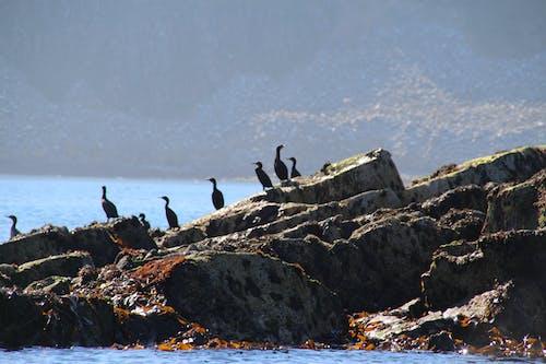 Free stock photo of blue water, gray, land, rock