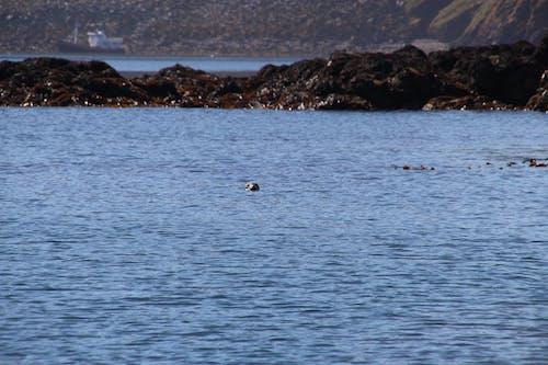 Free stock photo of blue water, boat, land, rocks