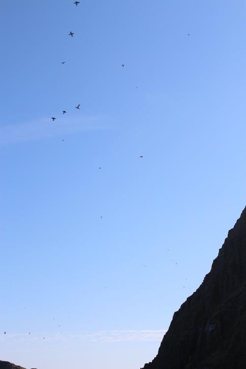 Foto stok gratis burung terbang, langit biru, langit cerah, silhoutte