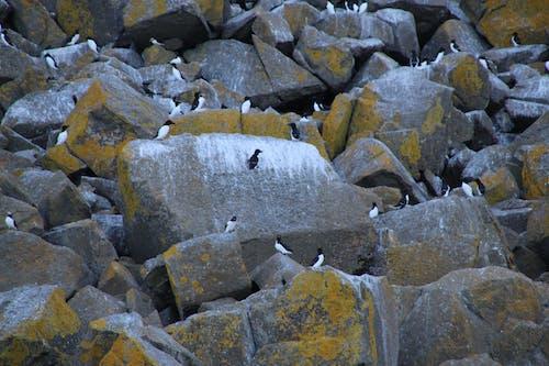 Free stock photo of gray, grey, Mossy rocks, rock
