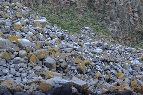 Foto stok gratis abu, batu, Batuan berlumut, burung air