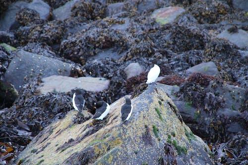 Ilmainen kuvapankkikuva tunnisteilla harmaa, kallio, kivet, seisominen