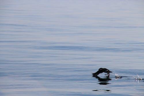 Foto stok gratis air, air reflektif, lepas landas, perairan yang tenang
