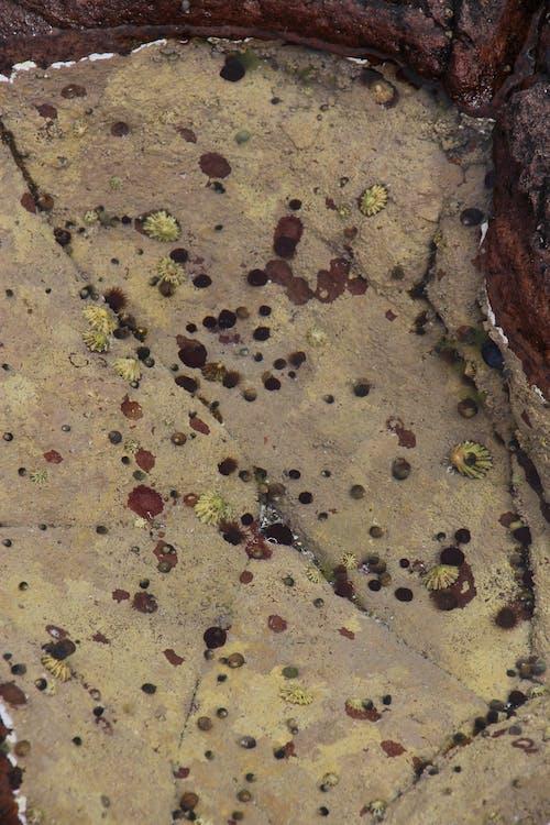 คลังภาพถ่ายฟรี ของ สระน้ำ, หอยทาก, หอยทากทะเล, หิน