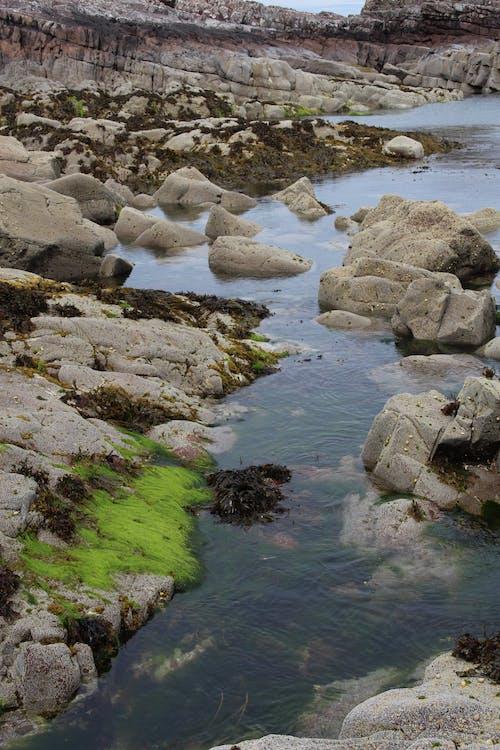 คลังภาพถ่ายฟรี ของ ตะไคร่น้ำ, ทะเล, น้ำ, สีเขียว